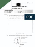 Receptor Organs Eye