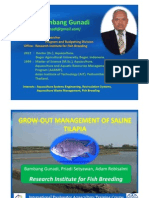 Tilapia Grow Out Management FAO Sukamandi