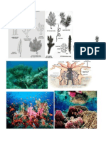 Coral Reefs Images