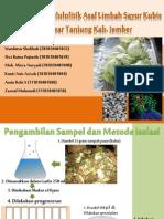 presentasi selulolitik_1.pptx
