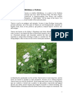 Yarrow as Medicine