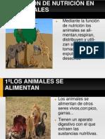 Funciones Vitales de Animales y Plantas Por Roberto y Mireia