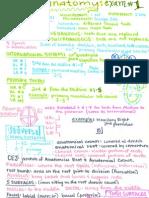 Dental Anatomy Exam 1 Notes