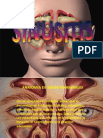 sinisitis-111010010025-phpapp02