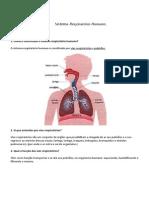 Sistema Respiratório Humano