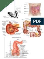 Anatomi Makro Mikro