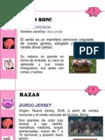 Manejo de Cerdos