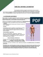 El Aparato Locomotor.Salud y Ejerccio Físico (1)