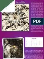 Xerophilia 2014  Calendar - 2