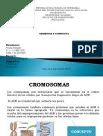 cromosomas-130914184550-phpapp02