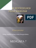 Anfis Sistem Reproduksi