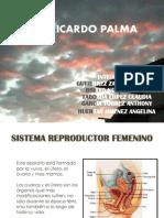 diapositivasdeinformaticaorganosreproductores-120227145420-phpapp02