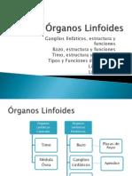 Órganos Linfoides - Seminario II 2009