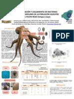 Bacterias 2008 octopus maya