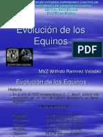 Evolucion de Los Equinos