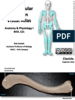 Bones of the Appendicular Skeleton - A Visual Guide