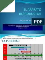 El_aparato_reproductor Clases 12 - 1