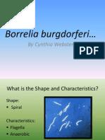 Borrelia burgdorferi1[1]
