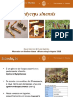 Cordyceps sinensis_PauloBaptista_DavidSánchez