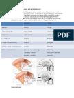 Anatomi Intestinum Mesenteriale