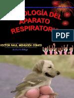 Radiologia respiratoria