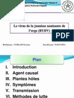 BYDV[1].pptx