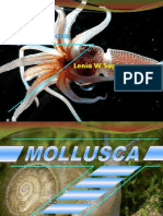 Mollusca-Ppt