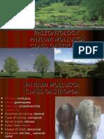 2_ Phylum Mollusca