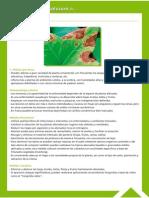 Guía Fitosanitaria34.pdf