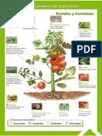 Guía Fitosanitaria3.pdf