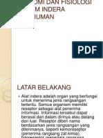Anatomi Dan Fisiologi Sistem Indera Penciuman