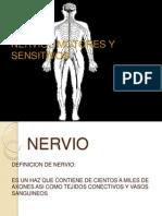 Nervios Motores y Sensitivos