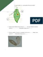 Contoh Soal UAP Zoologi Invertebrata