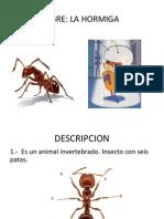 DISERTACIÓN HORMIGAS