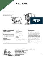 WILD_PIGS.pdf