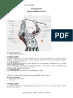 ejerciciosmusculacion-131128115740-phpapp02