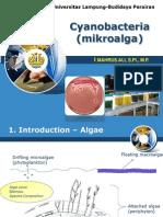 6- mikroalga