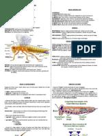 Entomology lab handouts