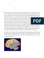 Brain Structures and Their Functions.as