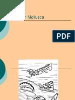 (28) Aplacophora, Monoplacophora, Bivalvia, Scaphopoda, Cephalopoda