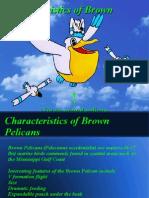 Characteristics of Brown Pelicans