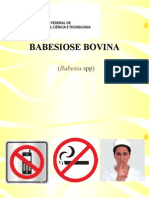 BABESIOSE BOVINA - Bovinocultura