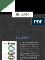 presentacin1-130812063652-phpapp02