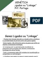 Genes Ligados ou Linkage