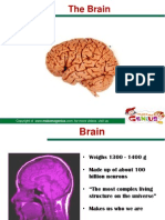 Mnt Target02 343621 541328 Www-1.Makemegenius.com Web Content Uploads Education Brain
