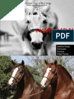 Apresentação- cavalo bretão- Finall (2)