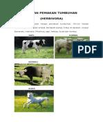 8800 Gambar Hewan Pemakan Rumput Dan Daging Gratis Terbaik
