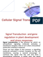 Signal Transduction and Gene Regulation in Plant Development