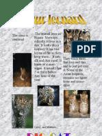 Coreybrumm and Mathew the Amur Leopard