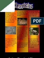 Kaela Cheetah Animal Report
